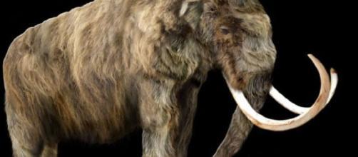 Lo scheletro di un esemplare di mammut lanoso in eccezionale stato di conservazione, è stato venduto ieri all'asta per 548mila. Foto: Facebook.