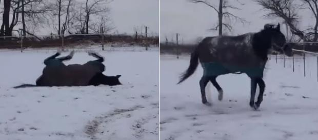 Horse plays in snow in Michigan. Image Credit: Blasting News