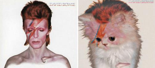 Artista colocou gatinhos em capas de álbuns clássicos (Foto: Reprodução)