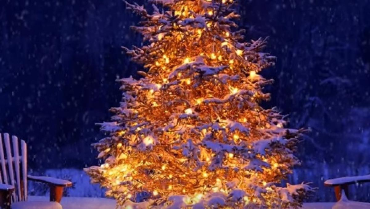 Pagan Christmas Tree.The Christmas Tree Grows From Pagan Roots To Christian Symbol