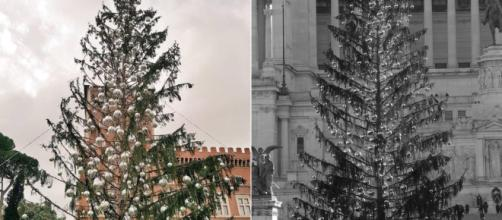 Christmas tree is Rome's plaza has died. Image Credit: Blasting News