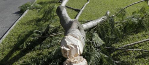 Las dos hipótesis sobre la tala de árboles cerca del aeropuerto ... - soy502.com