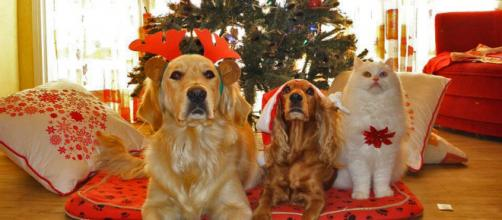 Christmas is a dangerous time for chocolate poisoning in dogs [Image credit: Pixabay]