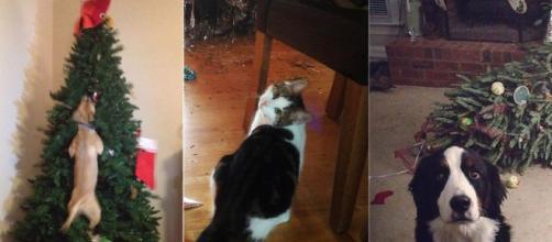 Dogs and cats ruining Christmas. Image Credit: Blasting News