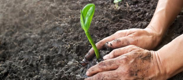 Manejo de suelos – Agriculturers.com | Red de Especialistas en ... - agriculturers.com