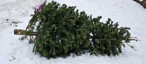 5 Ways To Recycle Your Christmas Tree [Image via Depolo/Flickr.com]