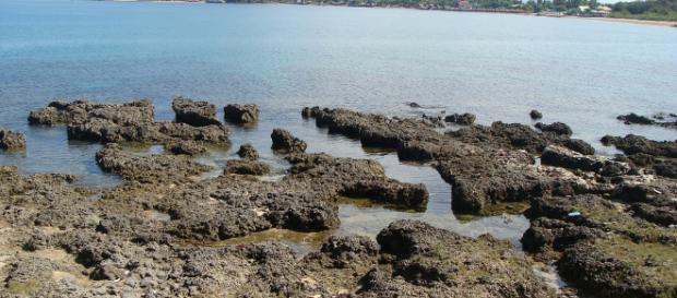 Dying coral reefs in Suso Santa Maria Ilocos Sur, Phillipines [Image credit: Serdenia Arlon via Flickr]