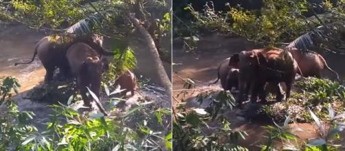 Heart-warming moment when a baby elephant is rescued from a well. Image Credit: Own work