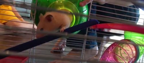 The basics of taking care of your hamster. [Image credit:WHAT'S INSIDE? FAMILY/YouTube]