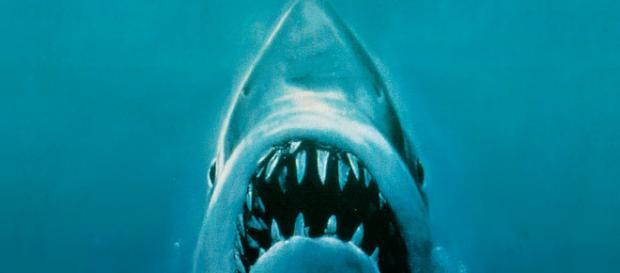 El grandioso legado de Tiburón a cuatro décadas de su estreno ... - codigoespagueti.com