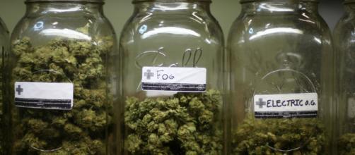 A partir del 01 de enero de 2018, el uso de marihuana será legal en el estado de California.