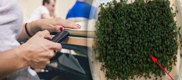 Dormir ao lado do celular pode ser prejudicial à saúde. Foto: Reprodução