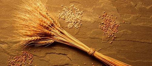 La sensibilità al grano non celiaca può dipendere non solo dal glutine, ma da altri fattori.
