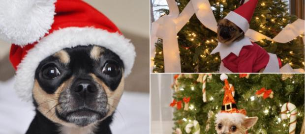 6 famous pets show off how to best celebrate the holiday season. Imge Credit: Blasting News