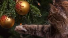 How to cat proof your Christmas tree for the holidays