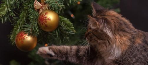 Cat-proof your Christmas tree this year. - [Image: Pixabay/CC0]