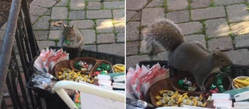 A fat squirrel was caught stealing chocolate and other goodies. Image Credit: Blasting News