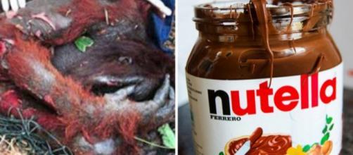 Produção de Nutella estaria causando destruição e morte de animais em ilhas de Sumatra e Bornéu