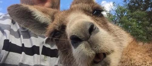 Selfie che ritraggono gli animali