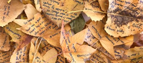 """Ho scritto poesie sulle foglie dei parchi di New York"""" - cronacaverde.com"""