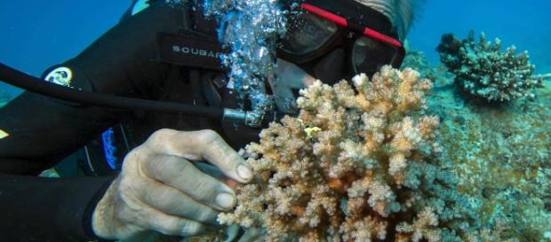 Mergulhador tocando no coral no fundo do mar
