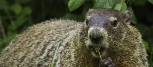Groundhog Day | Pixabay/skeeze