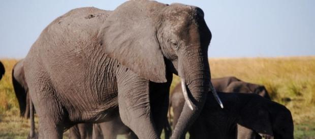 Sixth Sense Sees Elephant Refugees Flee To Last Stronghold in ... - wordpress.com