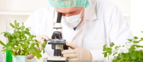 Analisi e studi sui possibili residui in frutta e ortaggi.
