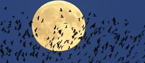 Triple treat: Eclipse, comet, full moon all coming Friday night / Photo from 'USA Today' - usatoday.com