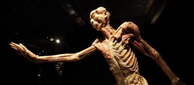"""Our Body"" una exposición donde te conocerás por dentro"