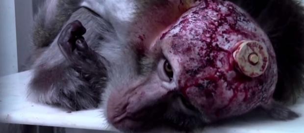 Schock-Bilanz: So viele Tierversuche in München wie noch nie | Für ... - wordpress.com