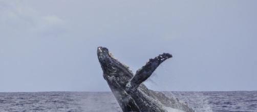whales Stories by Top Bloggers on Notey - notey.com