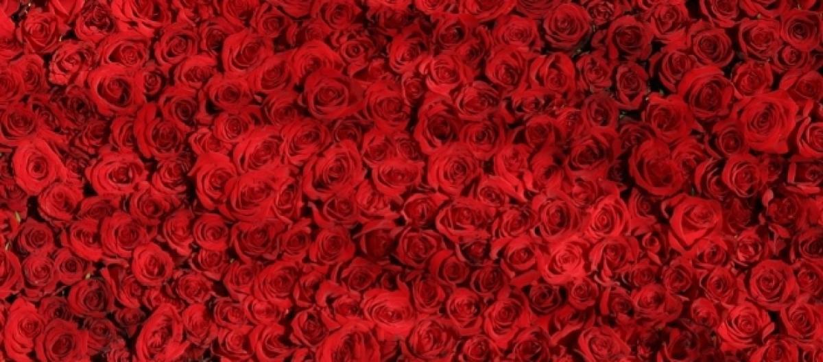 Frasi San Valentino Romantiche E Divertenti Per Lui E Per Lei
