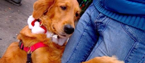 Meet Louboutina, the dog who offers hugs on the streets of NYC ... - metro.us