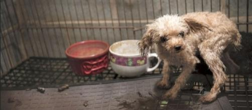 "San Francisco lawmakers pass law targeting ""puppy mills."" -- rollingstone.com"