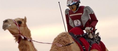 Camel racing é uma versão inusitada de jóquei com camelos