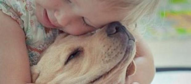 Cachorros desenvolvem personalidade do dono, aponta estudo