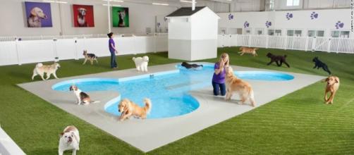 World's first animal terminal planned for JFK - CNN.com - cnn.com