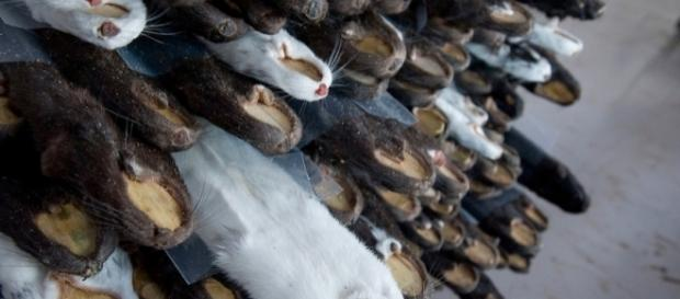 Minks raised to produce furs in China   Hong Kong Photographer ... - photoshelter.com