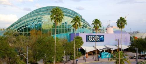 Florida Aquarium in Tampa, Florida | Expedia - expedia.com