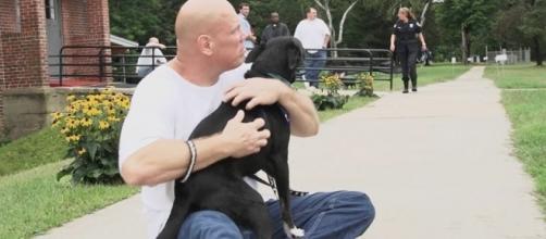 Dogs On The Inside - dogsontheinside.com