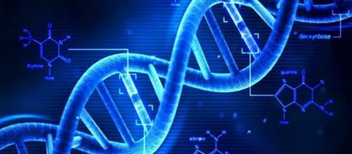 Il DNA condiziona l'atteggiamento e le abitudini di chi ci vive intorno