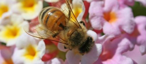 bees – EurActiv.com - euractiv.com