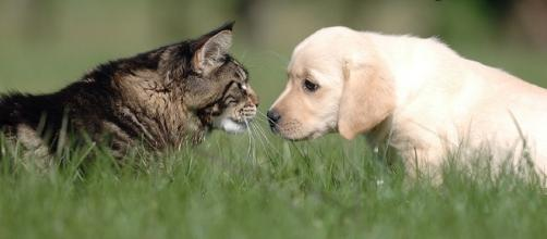 """""""National Love Your Pet Day"""" - Photo: Blasting News Library - Pinterest • The world's catalog of ideas - pinterest.com"""