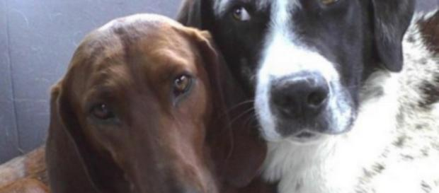 Cadela não aceita ser adotada sem amigo