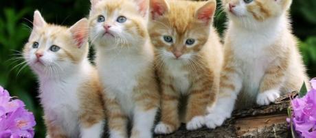 Mitos e curiosidades sobre os gatos