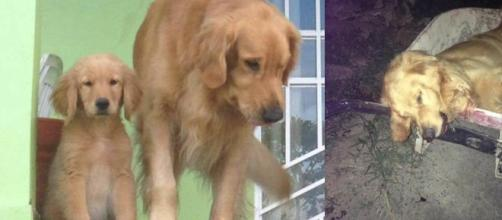Cachorro é morto a tiros em Roraima