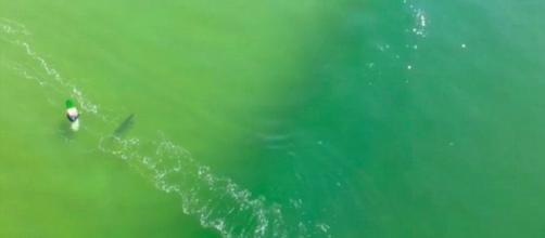 Drone footage captures shark charging at surfer (via: dailymail.co.uk)
