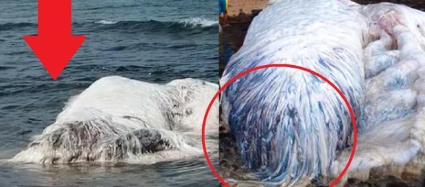 Um ser desconhecido foi encontrado morto em praia das Filipinas