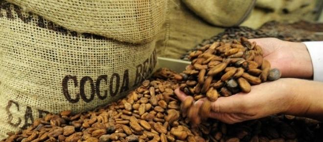 Cocoa: the bet of 2017 in the commodities market